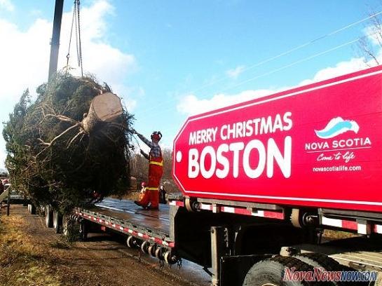 boston_tree_novanews