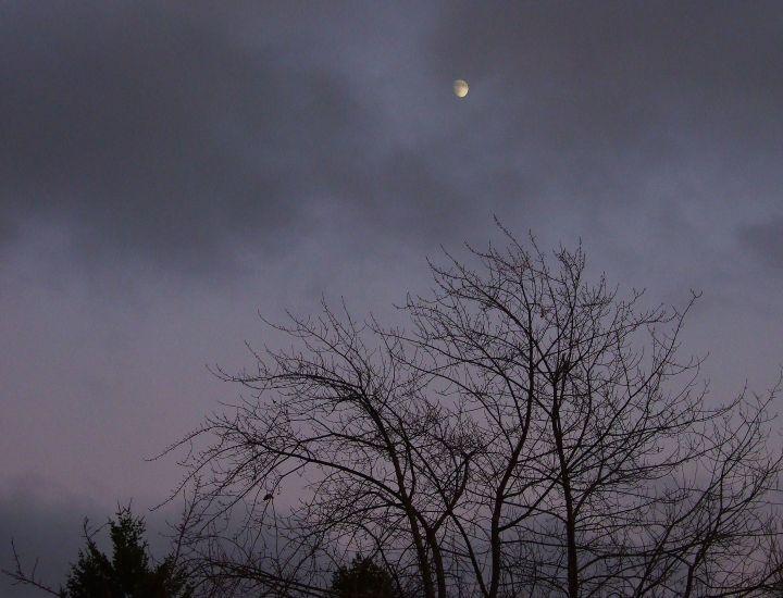 lunar_lavender3
