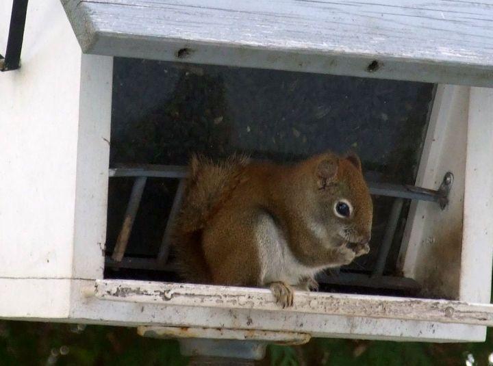 squirrelx