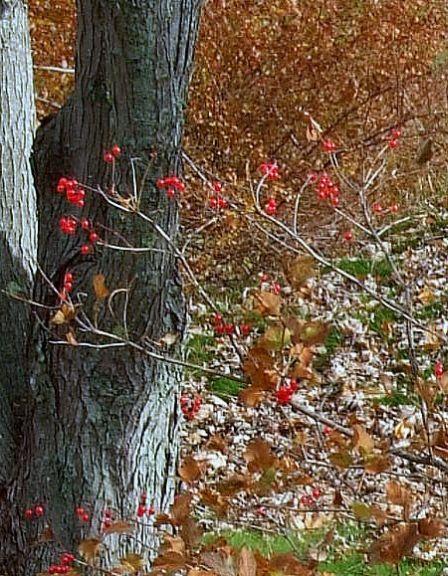 winter_jewel