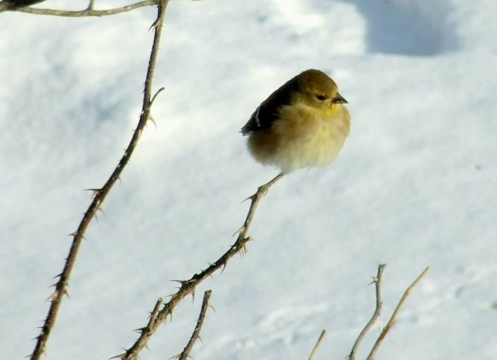 bird_stick