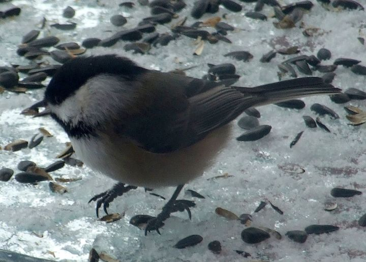 reservations_chickadee