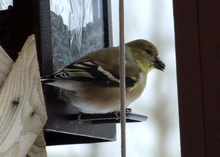 reservations_finch