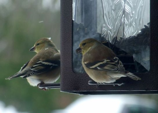reservations_finches2