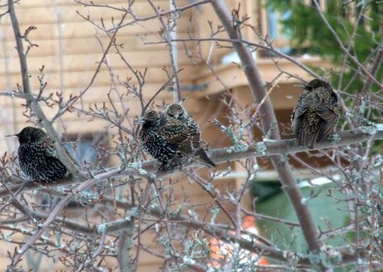 reservations_starlings