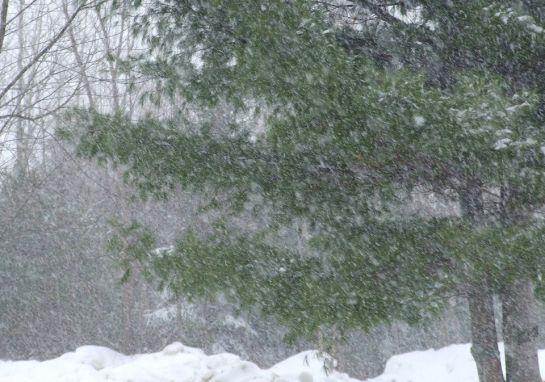 feb3_snow
