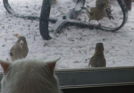 feb3_toby_birds