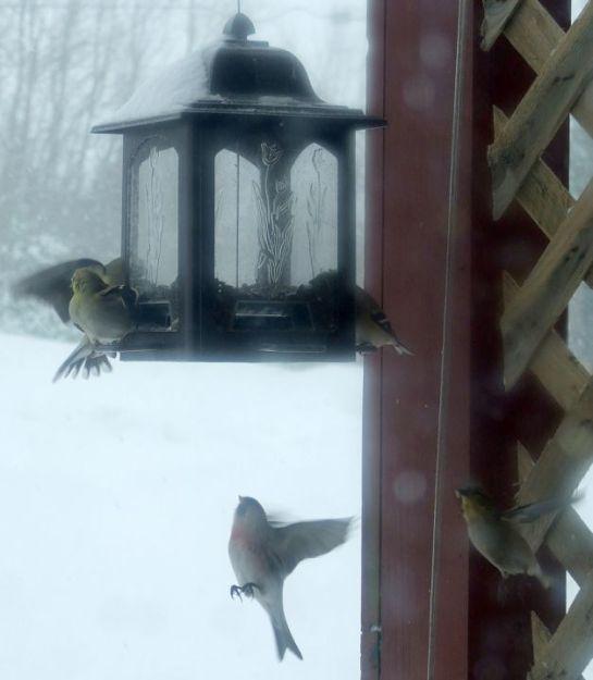 feeder_snow