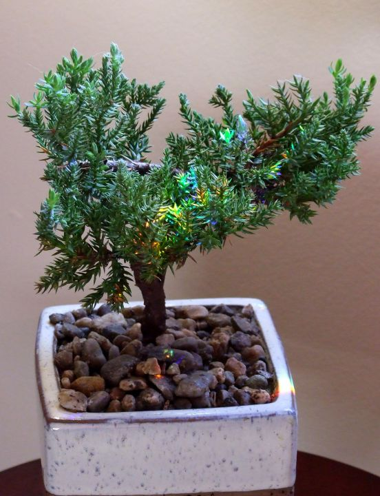 bonsai_rainbow