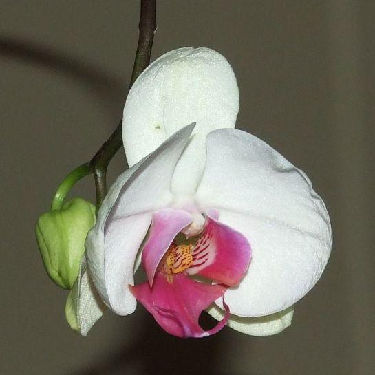 Bloomin' love?