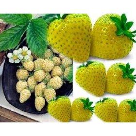 yellowwonderalpinestrawberry