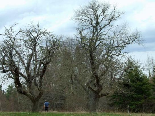 More bare trees...