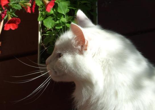 catmint_love1
