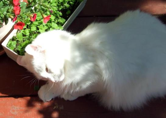 catmint_love3