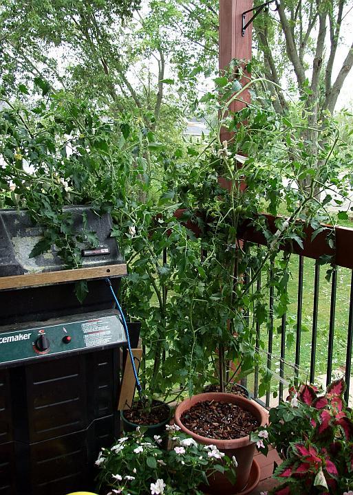 bill_pears_plants
