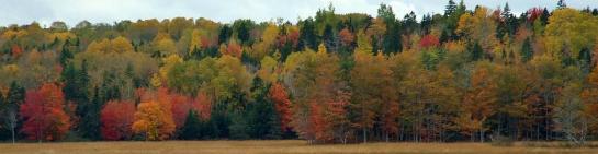 fall08_colour