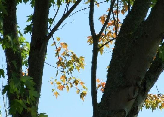 silent_leaves
