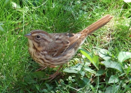 silent_sparrow