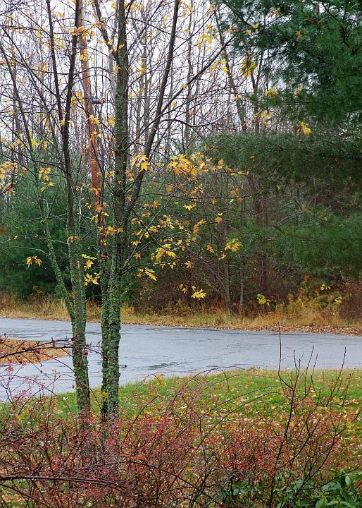 rainy_drive